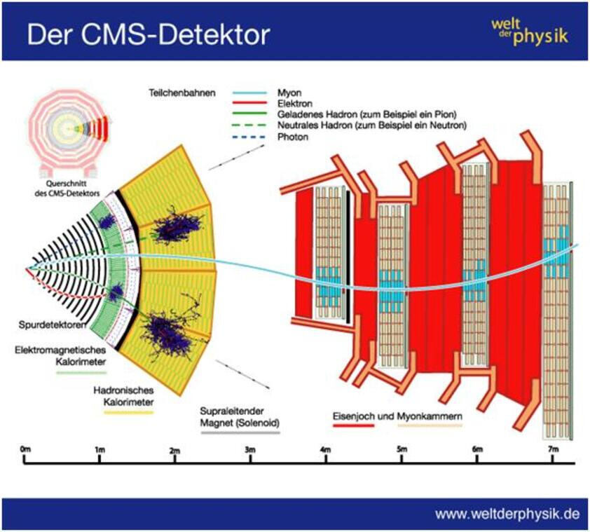 Graphic illustration of the detector
